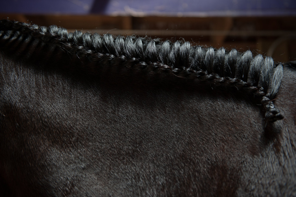 A braid runs down Dreamaster's mane as he stands in the aisle of barn 11 during the Dressage in the Sandhills Horse Show at the Pinehurst Harness Track on Friday, May 8, 2015 in Pinehurst, North Carolina.